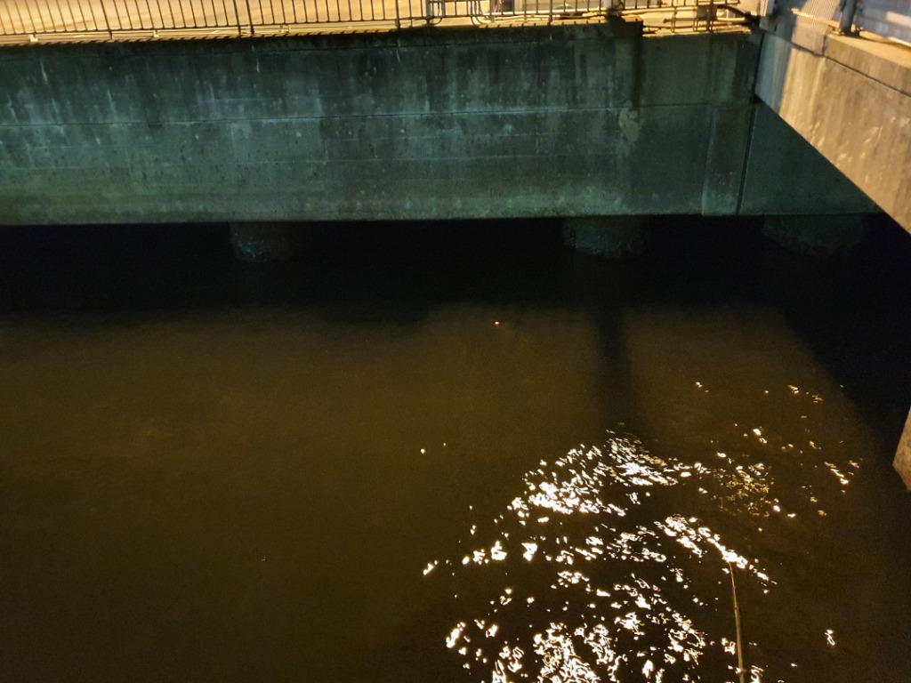 人のいない堤防で初めて夜釣りをしてみた:磯子