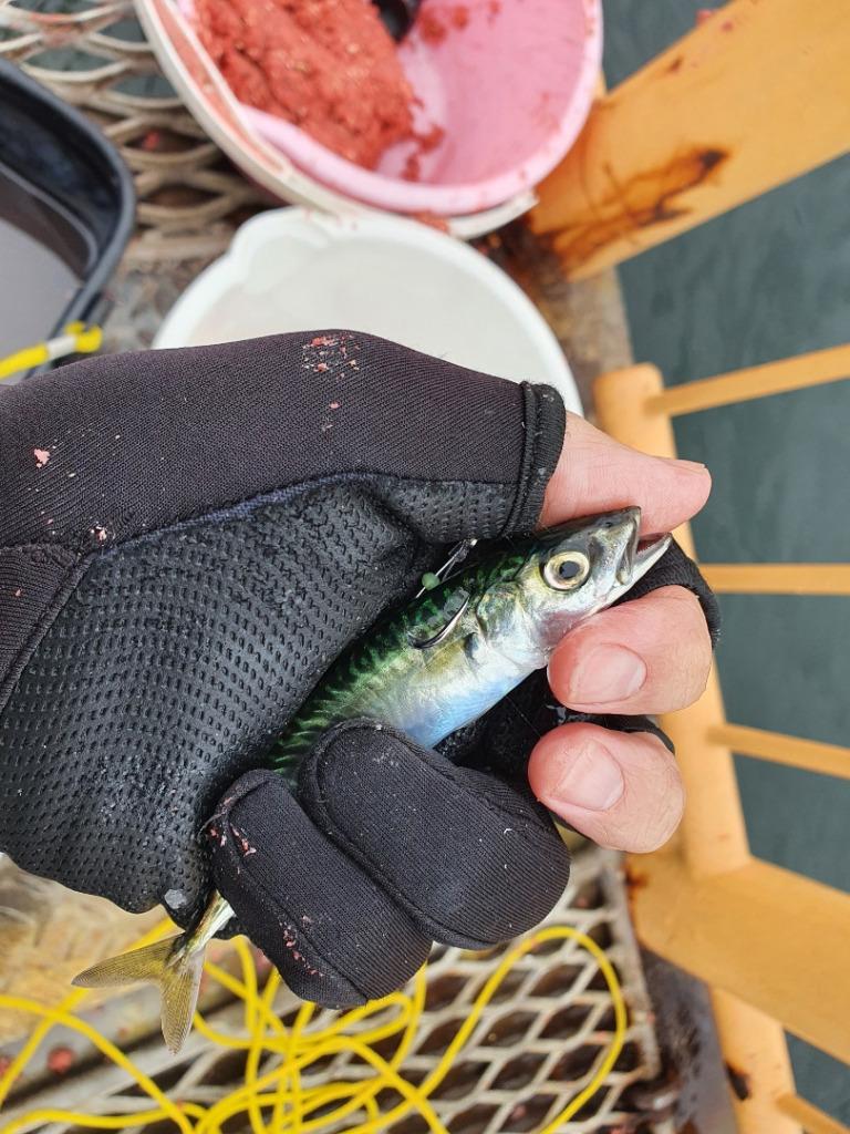 小雨の降る中フカセ釣りで高級魚が釣れた:釣れた状況とは?!