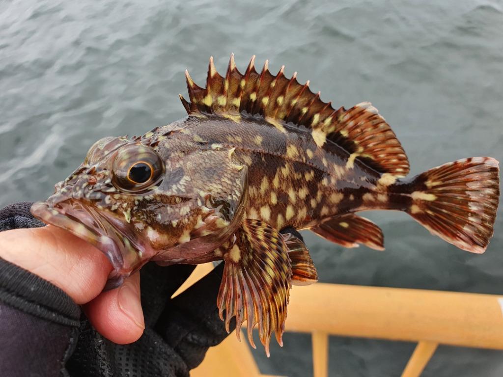 神奈川 ウキフカセ釣りでメジナを釣る:今回の当たりエサ?タナは?