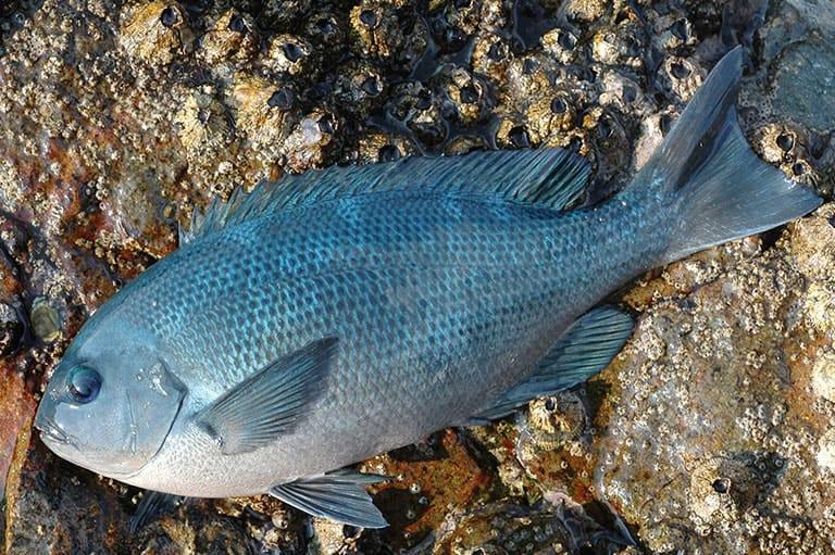 夏休みにおすすめのファミリーフィッシング!!ヘチ釣り、ウキフカセ釣り、カワハギ釣り