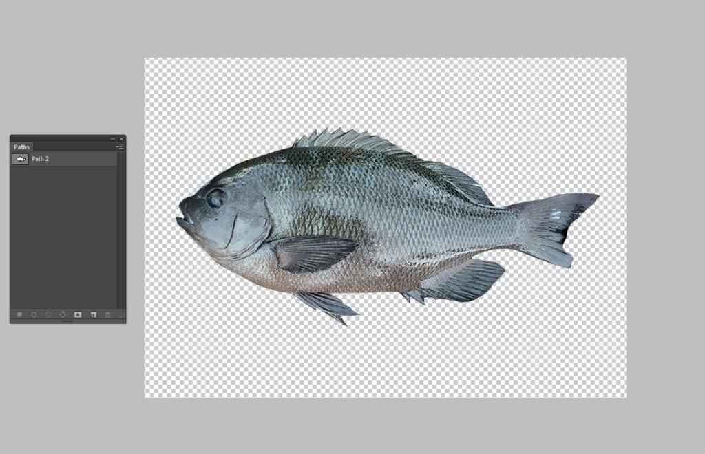 デジタル魚拓を無料で作ってみた!!作り方と作成工程を詳しく紹介!
