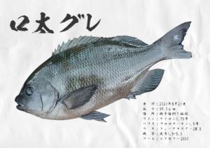 gyotaku_049