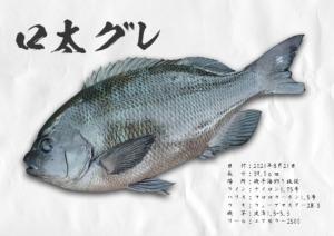 gyotaku_053