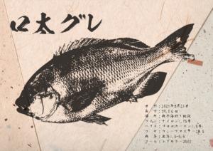 gyotaku_41