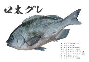 gyotaku_44