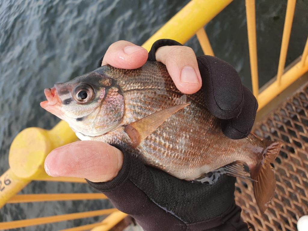 爆風、雷雨の中フカセ釣りをしてきた!!:神奈川 磯子海釣り施設