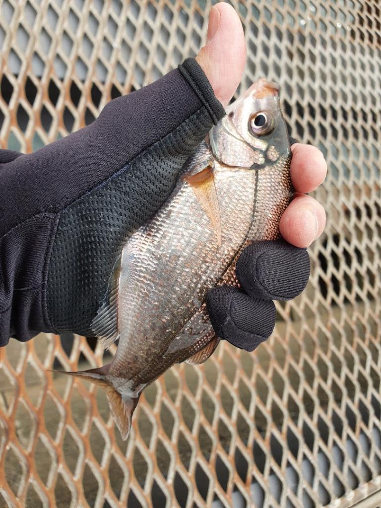 平日に磯子海釣り施設でウキフカセ釣り!投げ釣りでは大物が!!
