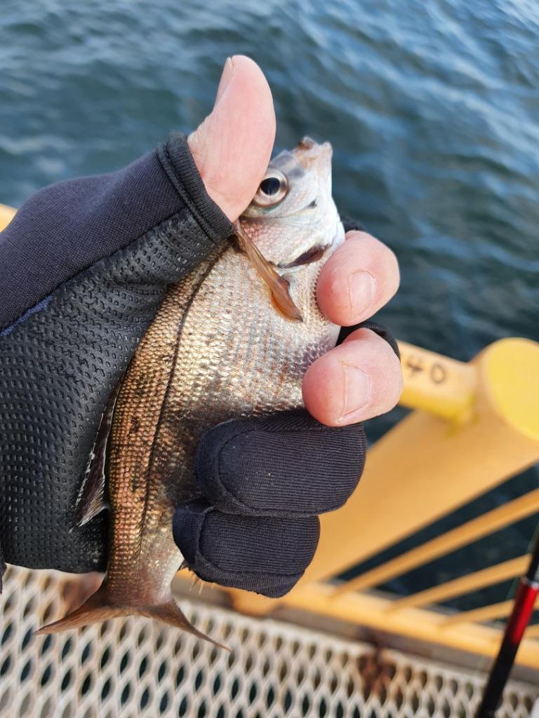 ボウズ脱出なるか?!ウキフカセ釣りで良型メジナを釣りたい!!!