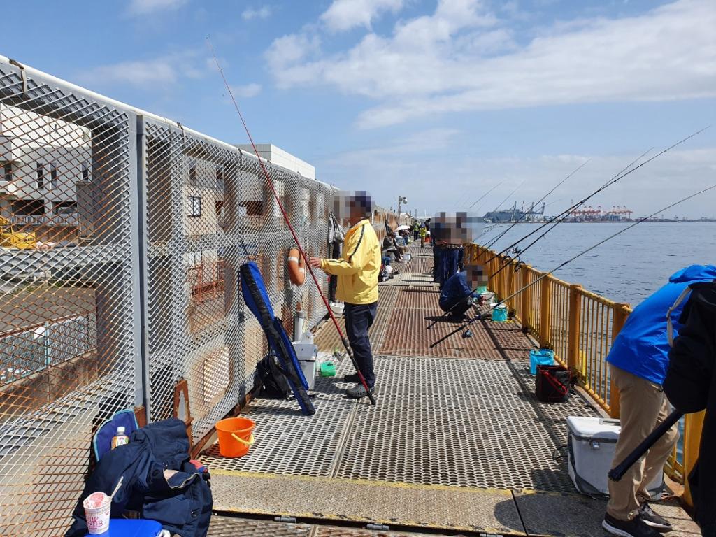 久しぶりにタコ釣りをすると?!:磯子海釣り施設