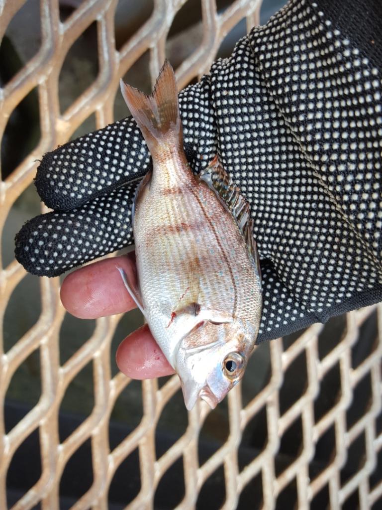 ウキフカセ釣り:エサ取り対策の仕掛け|タコ釣り:コツを徹底解説