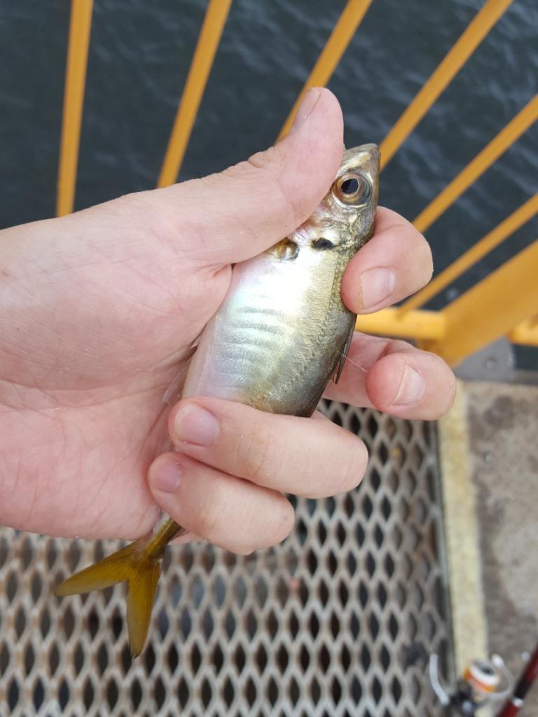 状況に応じた仕掛けの変更方法|ウキフカセ釣り